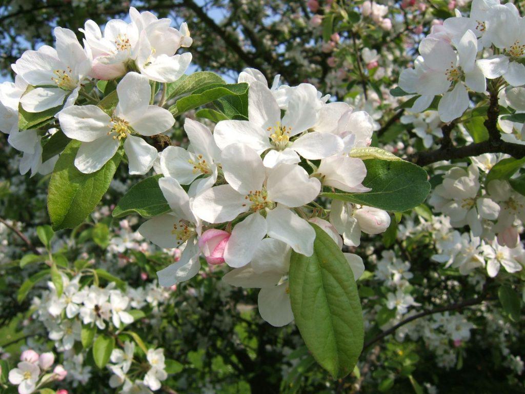 Den Inneren Frühling wecken Praxis für Gestalttherapie und Hypnose